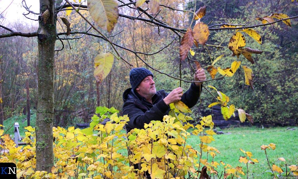 Hanjo IJkhout bij een notenboom zoals die ook in het Voedselbos zal worden aangeplant.