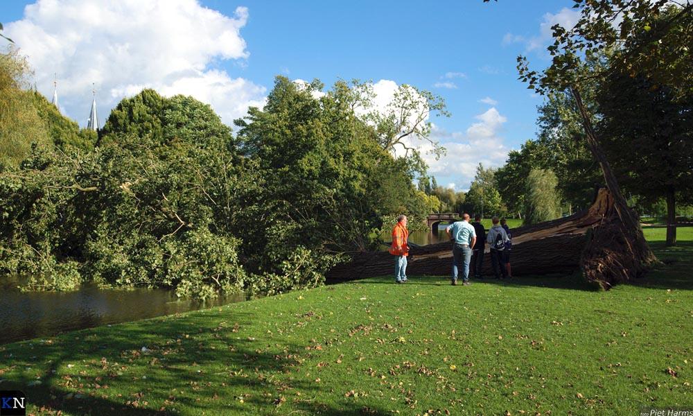 In het Stadspark legde een forse boom het loodje.