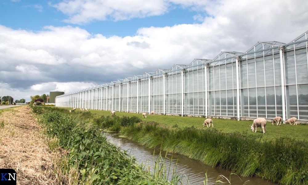Tuinbouwkassen in de Koekoekspolder.