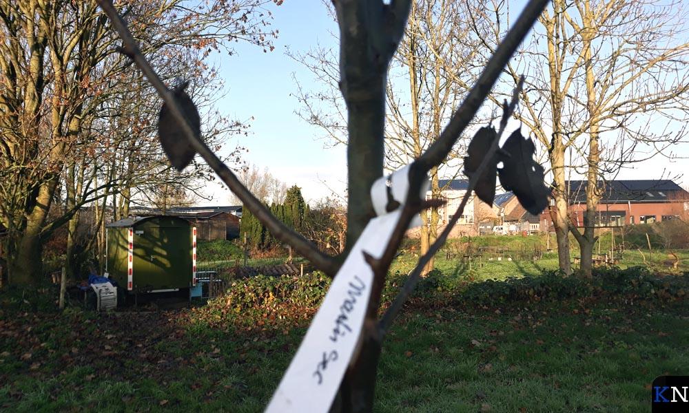Het oude ras Martin Sec is ook aangeplant in Voedselpark De Groene Brunneper