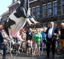 Koe bungelt weer aan Nieuwe Toren (video)