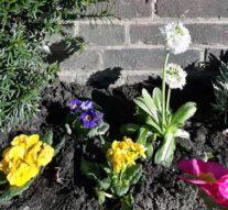 Natuur in Kampen (gedicht)