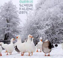 Veel Kamper kiekjes op Overijsselse scheurkalender 2019