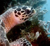 Kees Slot legt onbekende Thaise schildpad vast (video)