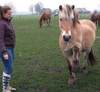 Vrijwilligers SAP bezoeken hun gepensioneerd paard