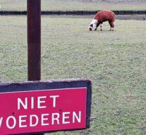 Dieren in hertenkamp overleden na illegaal voeren