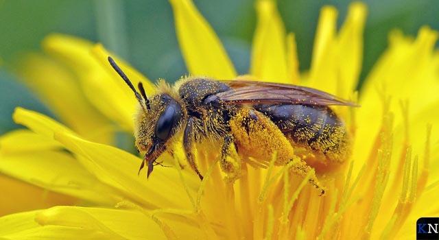 Bijengastdocenten gezocht voor basisscholen