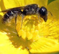 Bijen krijgen steeds meer plekken in Overijssel