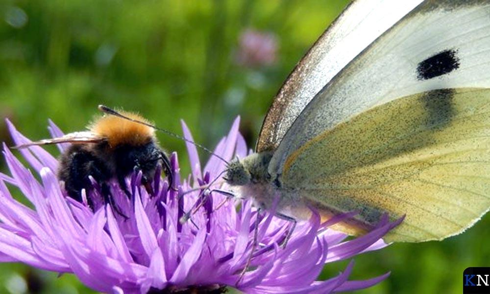 Bijen en vlinders zijn voorbeelden van bestuivers.