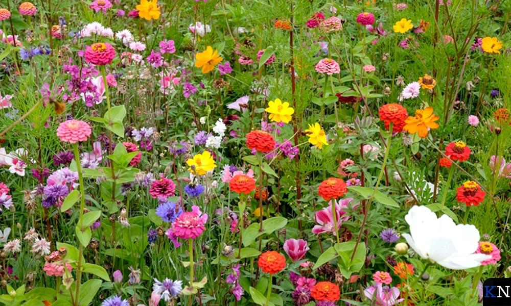 Bloemenperk voortkomend uit rijk kruidenmengsel.