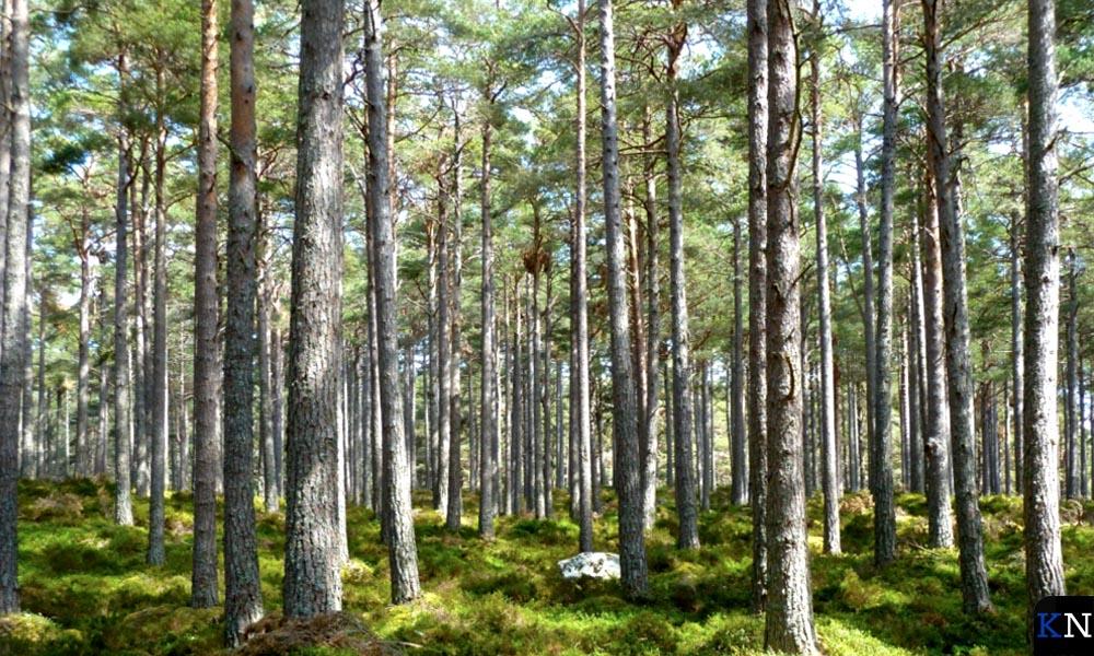 Miljoenen bomen moeten er in Nederland bijkomen.