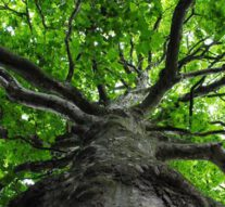 Overijssel wil voor elke inwoner één boom (video)