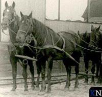 De alledaagse verschijning van paarden in Kampen (deel 1)
