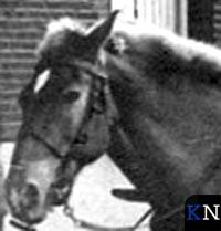 Volop paarden in Kampen (video)