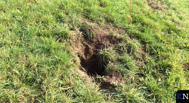 Honden veroorzaken toenemende schade aan dijken