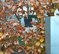 Zelf groenonderhoud verzorgen valt in goede aarde bij inwoners Zalk en gemeente Kampen