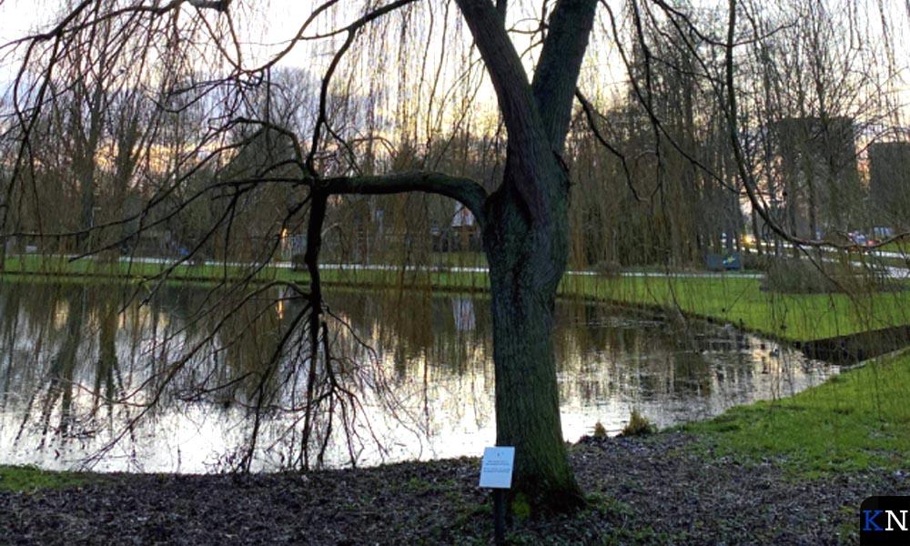 De treurwilg in het Stadspark fungeert ook als herdenkingsplek voor overleden en jonge kinderen.