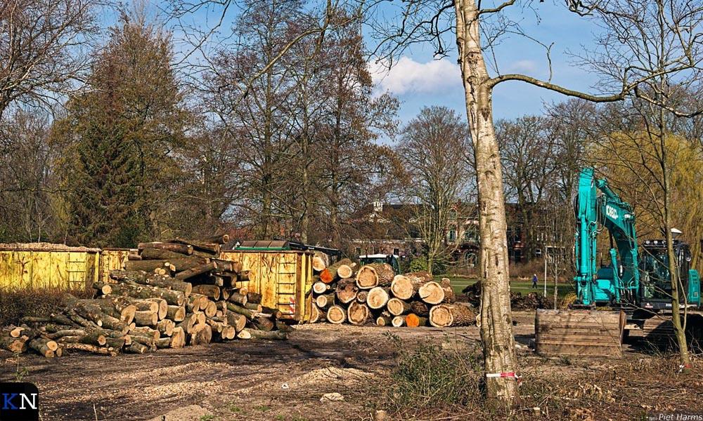 Massale bomenkap in het Stadspark als onderhoud en uit veiligheid.