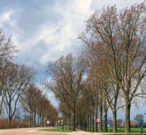 """Massale bomenkappen """"voor veiligheid"""""""
