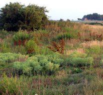 Plantensociologische Kring bezoekt Zalkerwaard